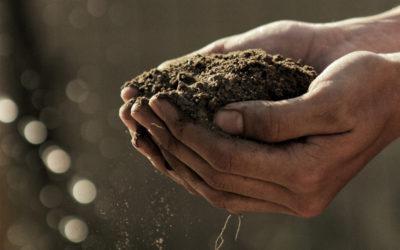 Quelles sont les alternatives aux Phytosanitaires ?