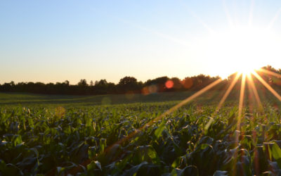 Remplacer les insecticides par le biocontrôle