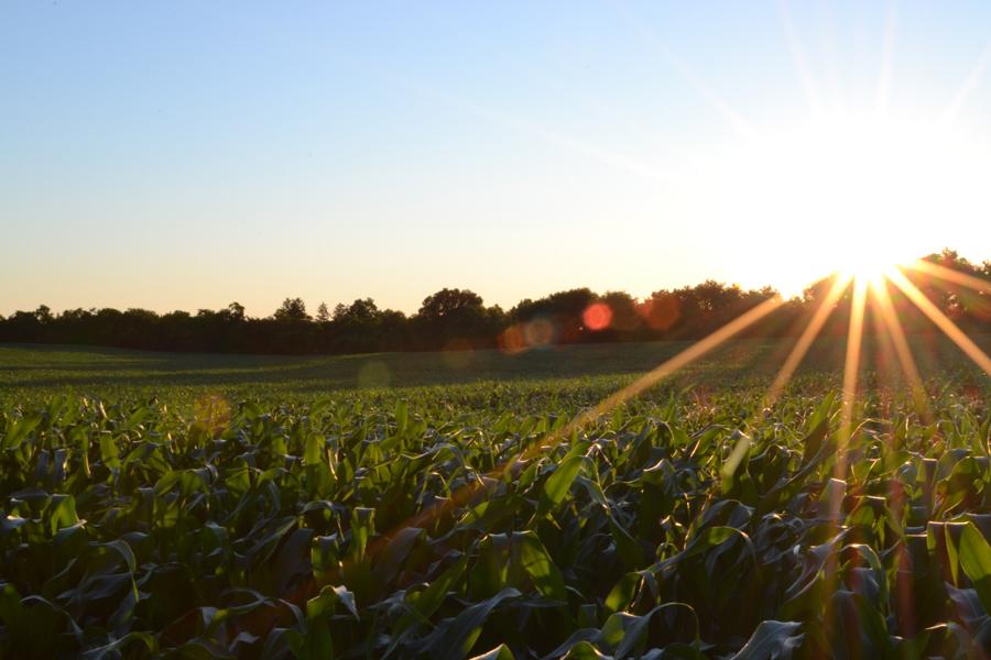 Remplacer les insecticides par des attractifs olfactifs comme un outil de biocontrôle.
