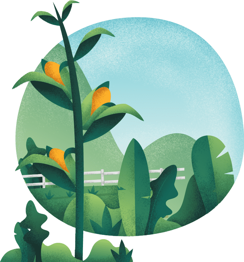 partenaires-illustration-agriodor